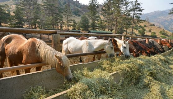 Sending Your Teen to a Working Ranch Instead of Jail